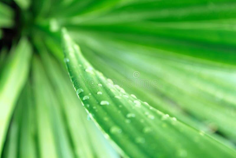 Πράσινο υπόβαθρο με τις πτώσεις της δροσιάς στοκ εικόνες