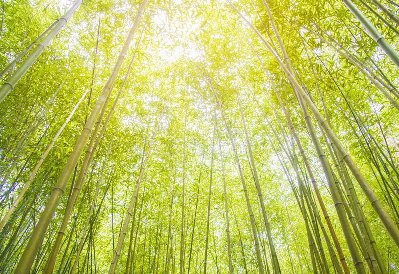 Πράσινο υπόβαθρο μπαμπού, ιαπωνικό δάσος μπαμπού Arashiyama κοντά στο Κιότο, Ιαπωνία στοκ φωτογραφία
