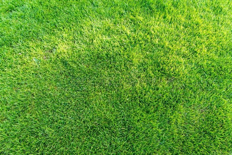 Πράσινο υπόβαθρο τομέων χλόης, σύσταση, σχέδιο στοκ εικόνα με δικαίωμα ελεύθερης χρήσης