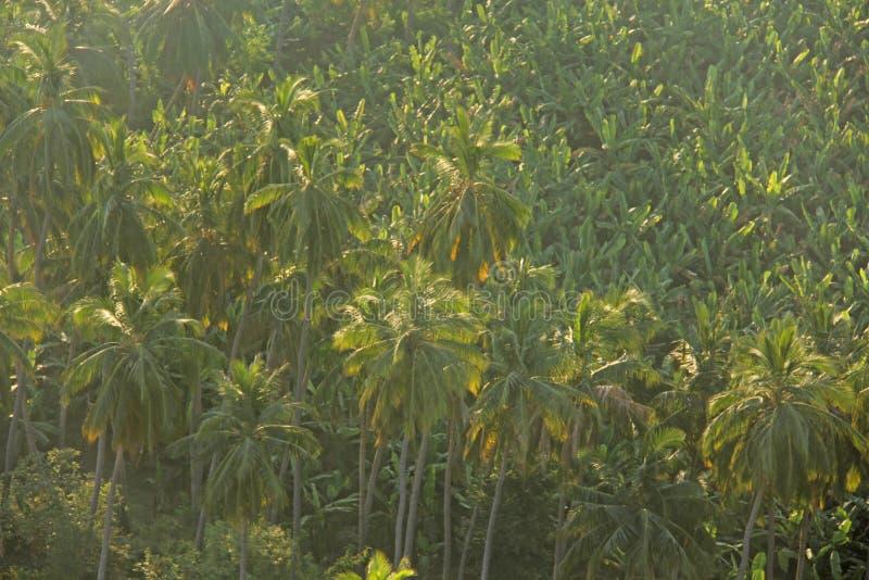 Πράσινο υπόβαθρο των φοινίκων ανασκόπηση τροπική Φοίνικας ο στοκ φωτογραφίες