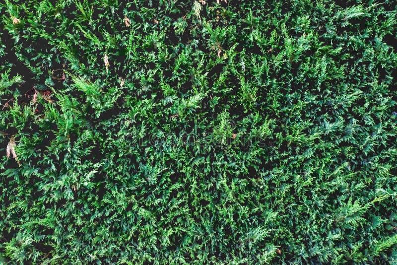 Πράσινο υπόβαθρο φρακτών για το σχέδιο Πράσινη σύσταση φρακτών στοκ φωτογραφίες με δικαίωμα ελεύθερης χρήσης