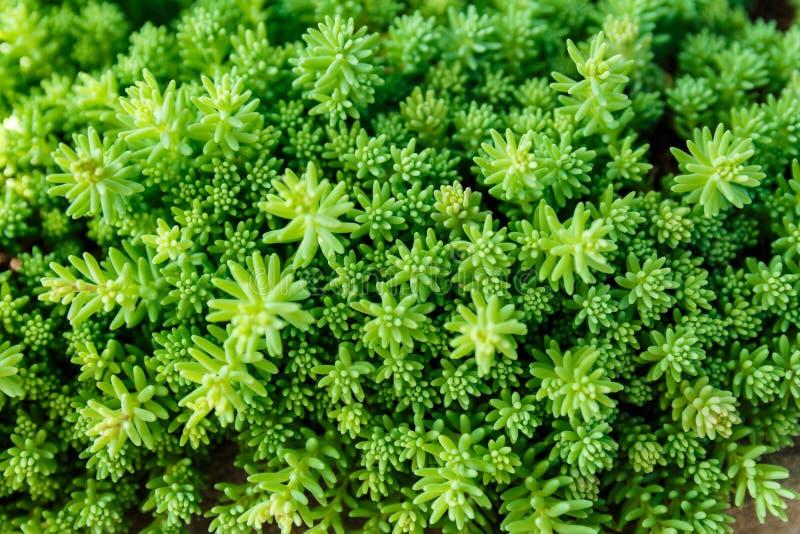 Πράσινο υπόβαθρο χλόης στοκ φωτογραφία