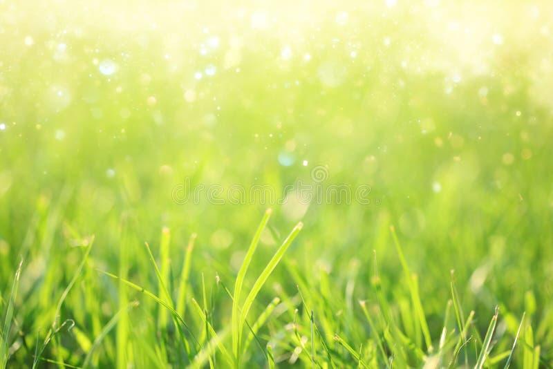 Πράσινο υπόβαθρο χλόης στοκ εικόνες