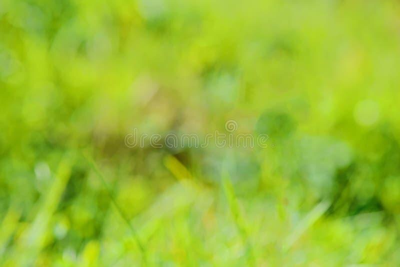 Πράσινο υπόβαθρο blurrd στοκ εικόνες