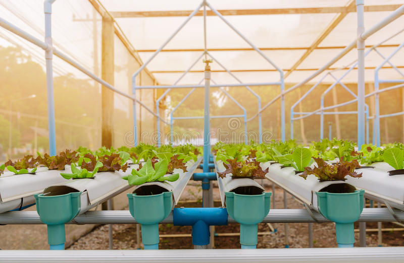 Πράσινο υδροπονικό οργανικό λαχανικό σαλάτας στο αγρόκτημα, Ταϊλάνδη στοκ φωτογραφία με δικαίωμα ελεύθερης χρήσης