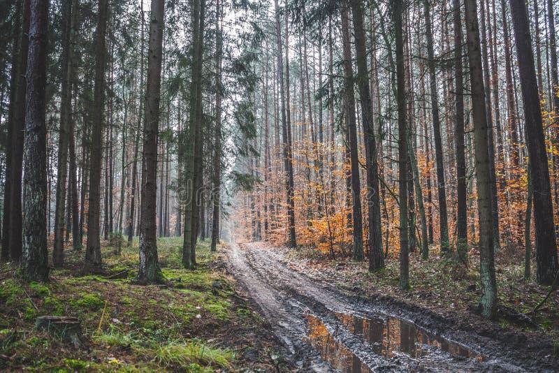 Πράσινο φθινόπωρο στοκ εικόνες με δικαίωμα ελεύθερης χρήσης
