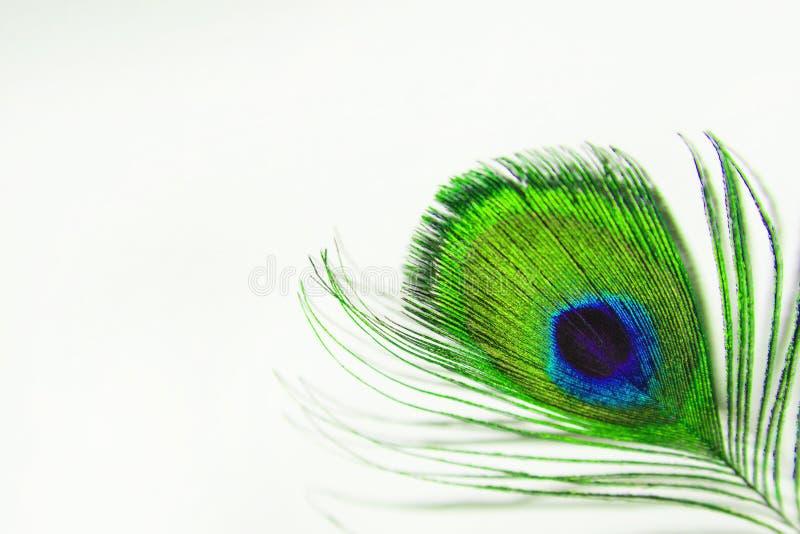 Πράσινο φτερό peacock σε ένα άσπρο φύλλο του εγγράφου Κινηματογράφηση σε πρώτο πλάνο φτερών Peacock στο άσπρο υπόβαθρο - θαμπάδα στοκ φωτογραφίες