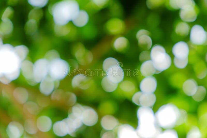 Πράσινο φυσικό υπόβαθρο από το δέντρο εστίασης ή bokeh στοκ εικόνα