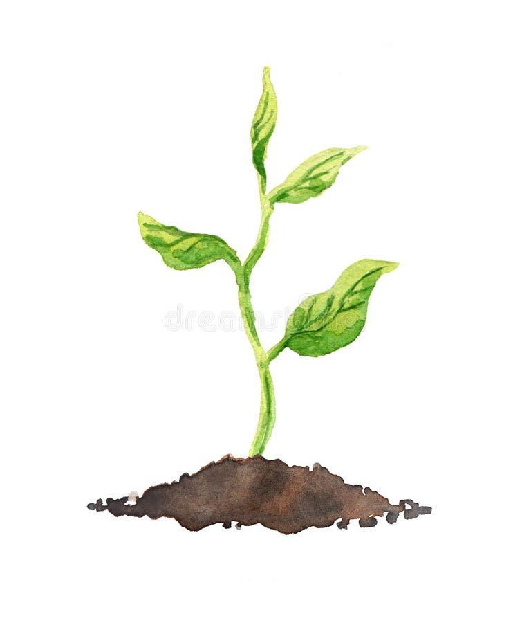 Πράσινο φυτό με τα φύλλα που αυξάνονται στο χώμα watercolor απεικόνιση αποθεμάτων