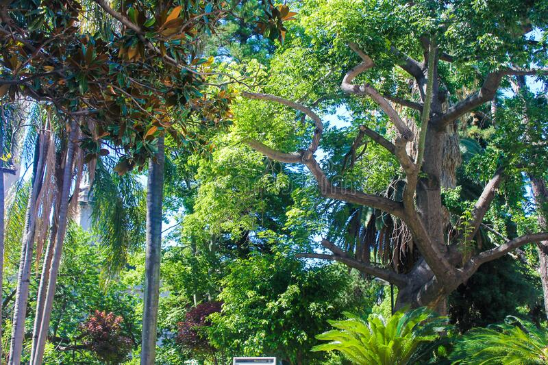 Πράσινο Φυτό Σε Εξωτερικό Χώρο στοκ φωτογραφίες με δικαίωμα ελεύθερης χρήσης