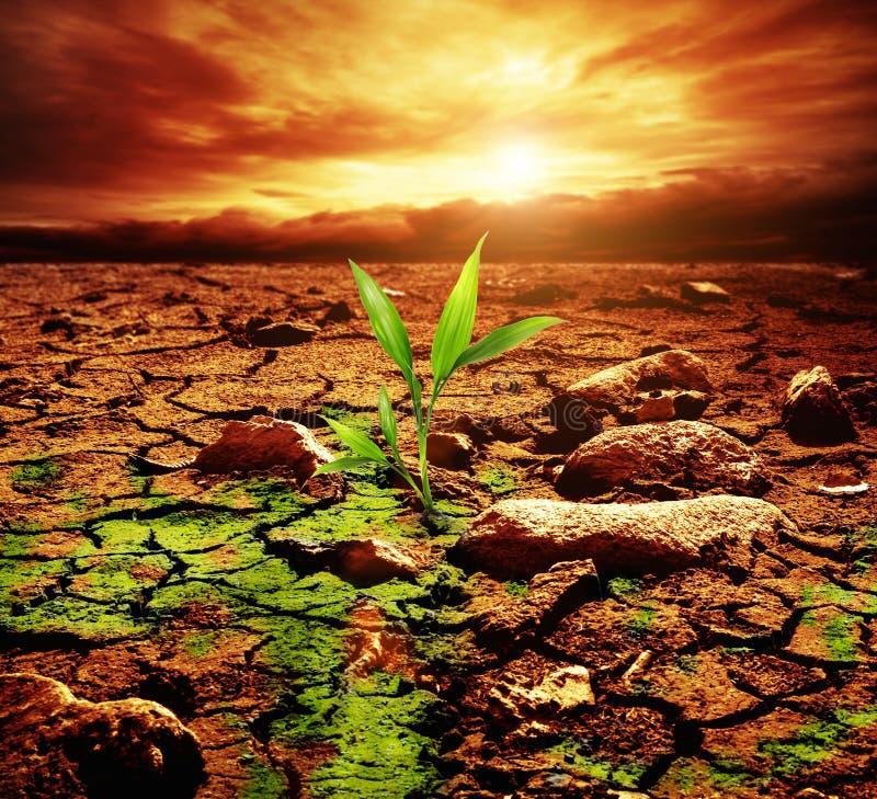 Πράσινο φυτό στην έρημο στοκ φωτογραφία