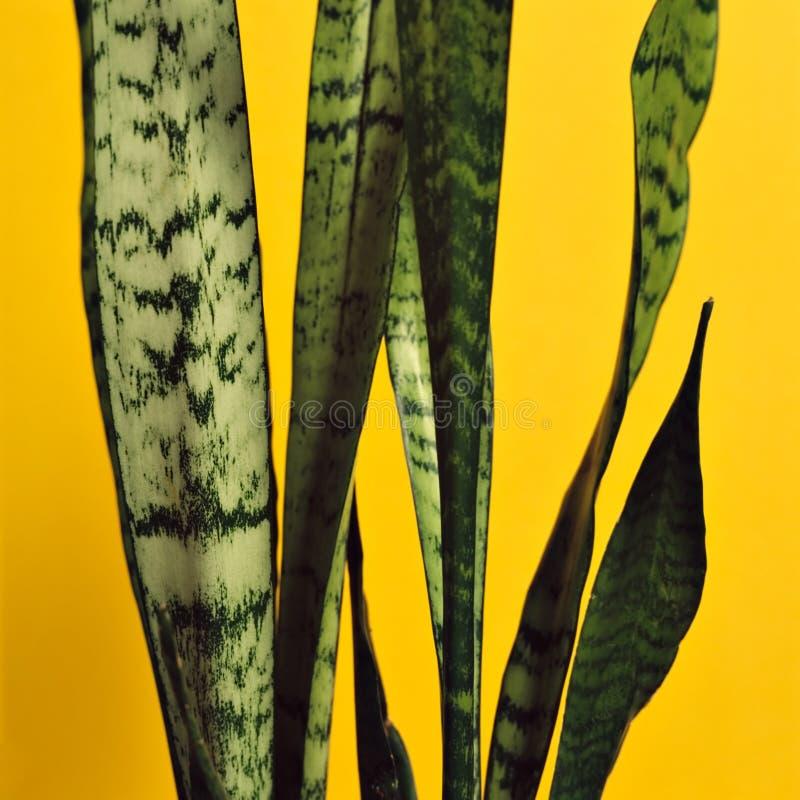 πράσινο φυτό στοκ εικόνες με δικαίωμα ελεύθερης χρήσης