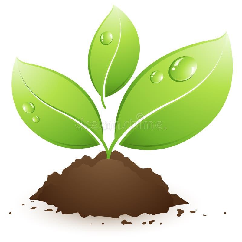 πράσινο φυτό ελεύθερη απεικόνιση δικαιώματος
