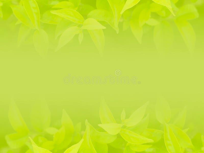 πράσινο φύλλο ανασκόπησης φυσικό στοκ εικόνες