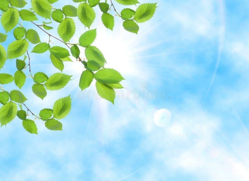 πράσινο φύλλο απέναντι από τον ήλιο στοκ φωτογραφίες με δικαίωμα ελεύθερης χρήσης