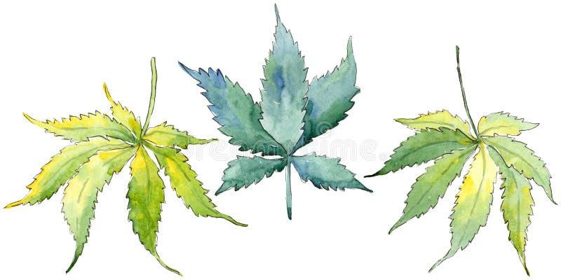Πράσινο φύλλο καννάβεων Floral φύλλωμα βοτανικών κήπων φυτών φύλλων Απομονωμένο στοιχείο απεικόνισης διανυσματική απεικόνιση