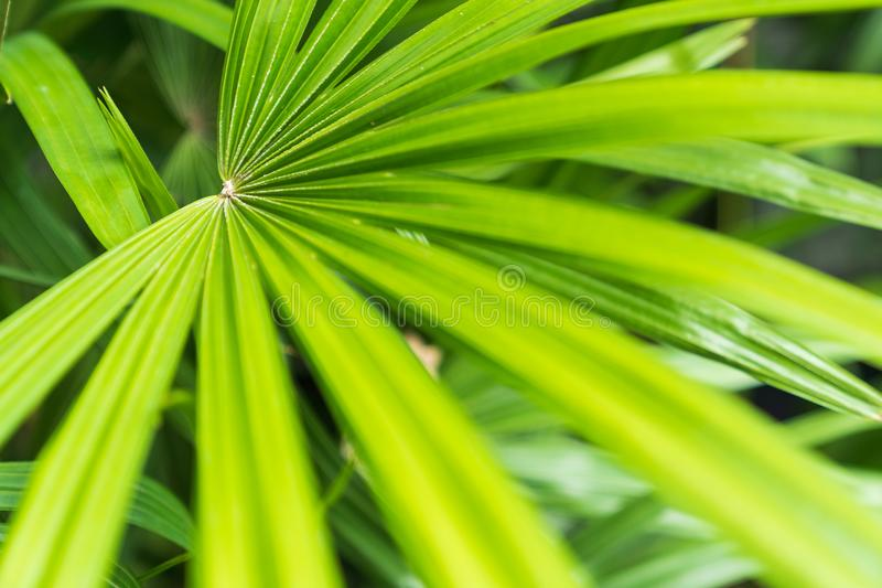 Πράσινο φύλλο κατασκευασμένο στοκ φωτογραφία με δικαίωμα ελεύθερης χρήσης