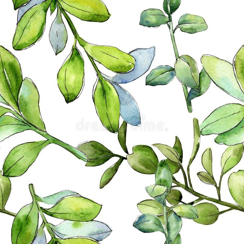 Πράσινο φύλλο πυξαριού Watercolor Floral φύλλωμα βοτανικών κήπων φυτών φύλλων Άνευ ραφής πρότυπο ανασκόπησης ελεύθερη απεικόνιση δικαιώματος