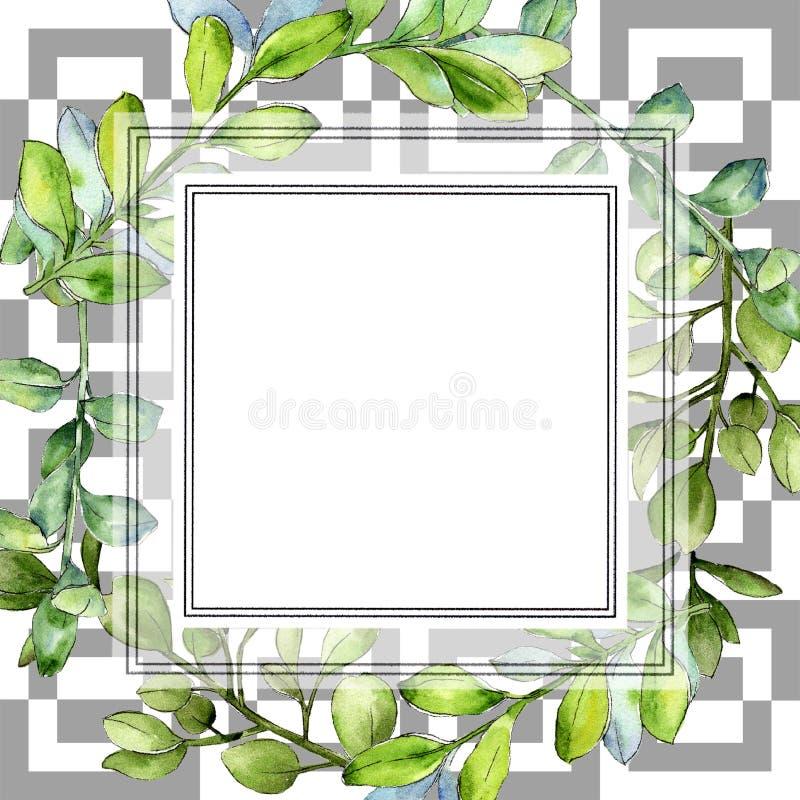 Πράσινο φύλλο πυξαριού Watercolor Floral φύλλωμα βοτανικών κήπων φυτών φύλλων Τετράγωνο διακοσμήσεων συνόρων πλαισίων ελεύθερη απεικόνιση δικαιώματος