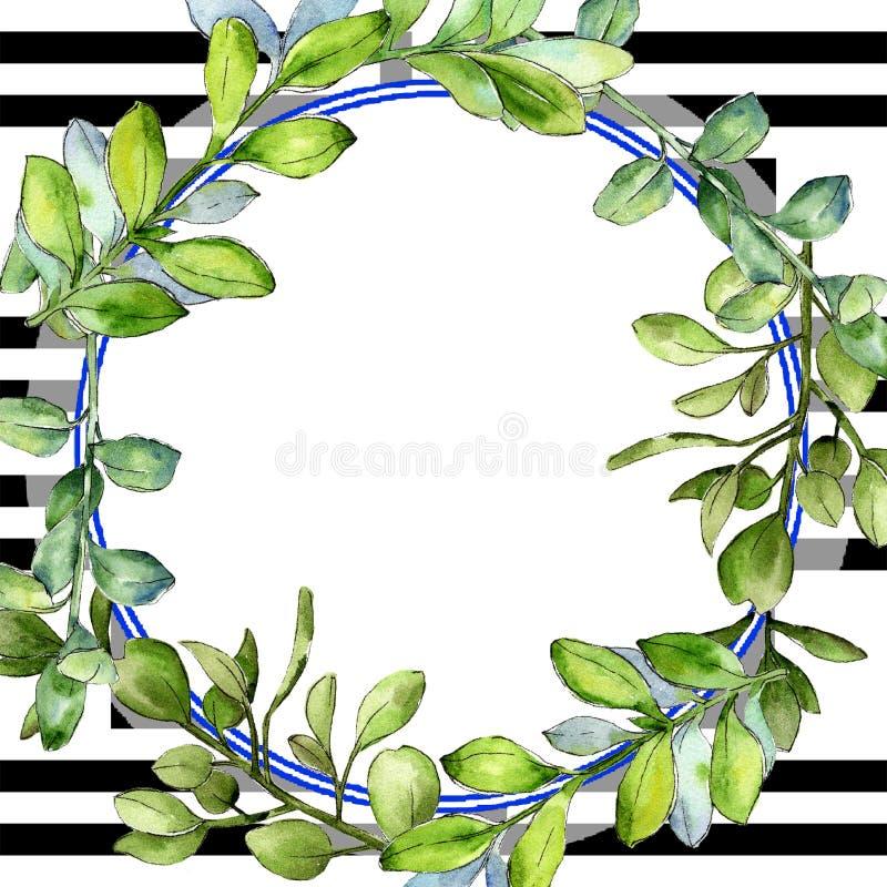 Πράσινο φύλλο πυξαριού Watercolor Floral φύλλωμα βοτανικών κήπων φυτών φύλλων Τετράγωνο διακοσμήσεων συνόρων πλαισίων απεικόνιση αποθεμάτων