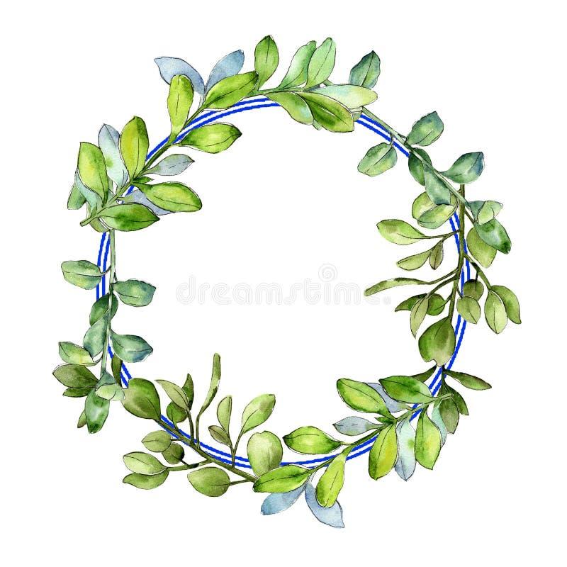 Πράσινο φύλλο πυξαριού Watercolor Floral φύλλωμα βοτανικών κήπων φυτών φύλλων Τετράγωνο διακοσμήσεων συνόρων πλαισίων διανυσματική απεικόνιση