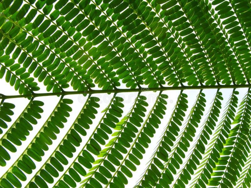 πράσινο φύλλο συστοιχία&sigm στοκ εικόνες με δικαίωμα ελεύθερης χρήσης