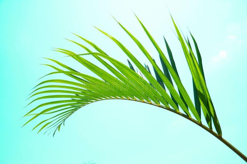 Πράσινο φύλλο του φοίνικα καρύδων Δημιουργικός φιαγμένος από πράσινα φύλλα δέντρων, τρύγος που τονίζεται στοκ φωτογραφία