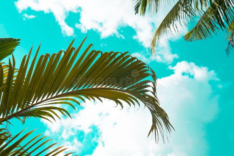 Πράσινο φύλλο του φοίνικα καρύδων Δημιουργικός φιαγμένος από πράσινα φύλλα δέντρων, τρύγος που τονίζεται στοκ εικόνες με δικαίωμα ελεύθερης χρήσης