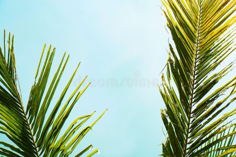 Πράσινο φύλλο του φοίνικα καρύδων Δημιουργικός φιαγμένος από πράσινα φύλλα δέντρων, τρύγος που τονίζεται στοκ φωτογραφία με δικαίωμα ελεύθερης χρήσης