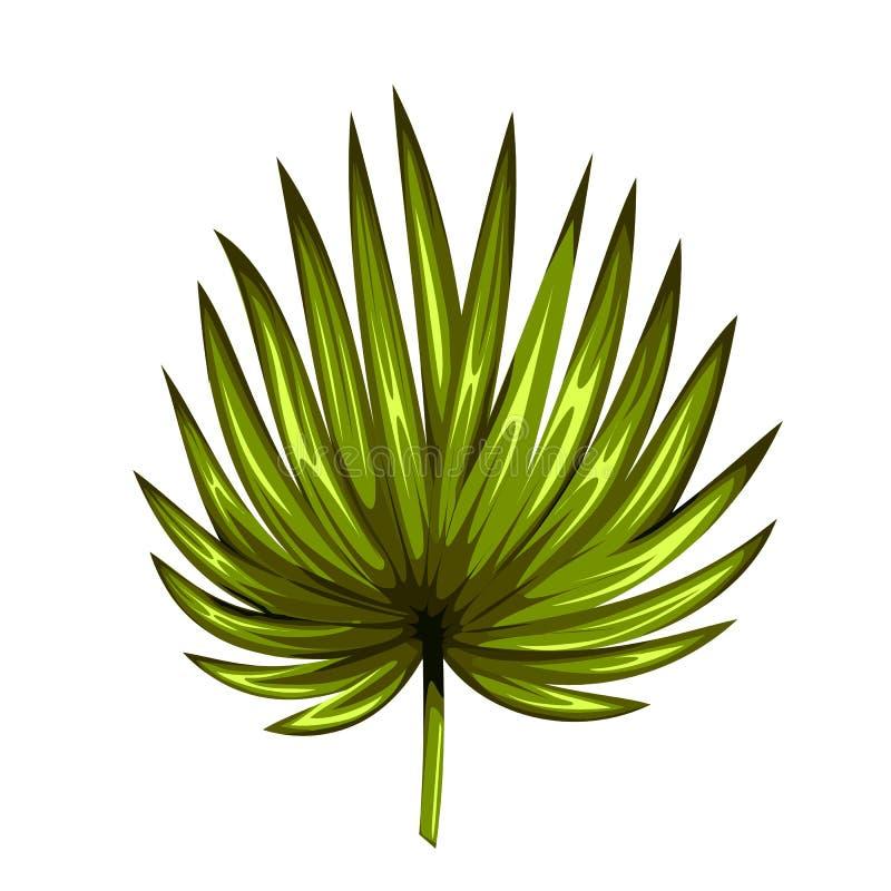 Πράσινο φύλλο του φοίνικα που απομονώνεται στο άσπρο υπόβαθρο Εικονίδιο φύλλων φοινικών ελεύθερη απεικόνιση δικαιώματος