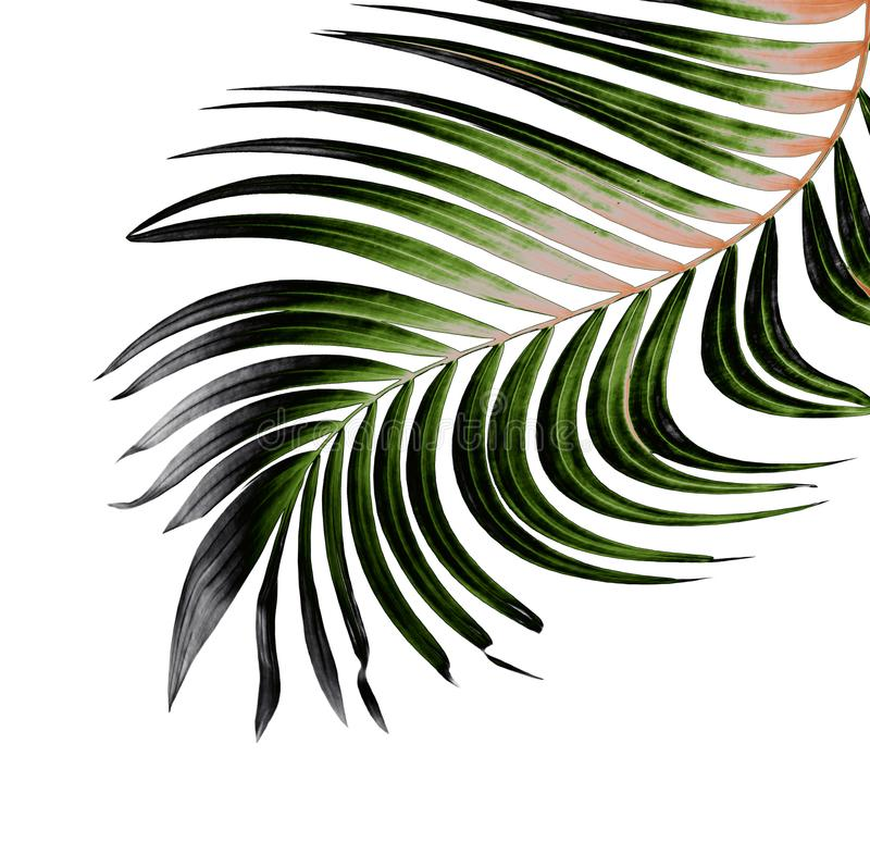 Πράσινο φύλλο του φοίνικα στο λευκό διανυσματική απεικόνιση