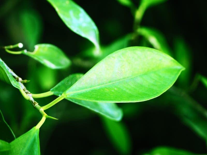 Πράσινο φύλλο το πρωί στοκ εικόνα