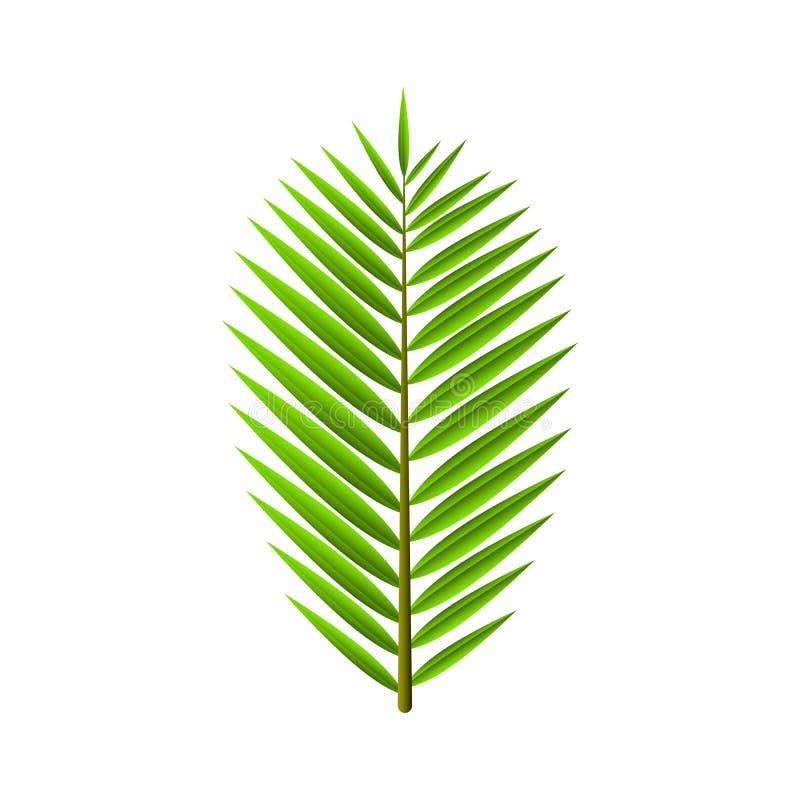 Πράσινο φύλλο από το φοίνικα που απομονώνεται στο άσπρο υπόβαθρο Τροπικές, εξωτικές εγκαταστάσεις Ύφος κινούμενων σχεδίων διανυσματική απεικόνιση