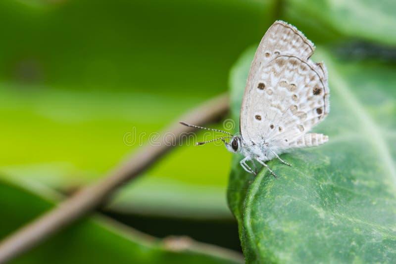 πράσινο φύλλο πεταλούδων στοκ εικόνα