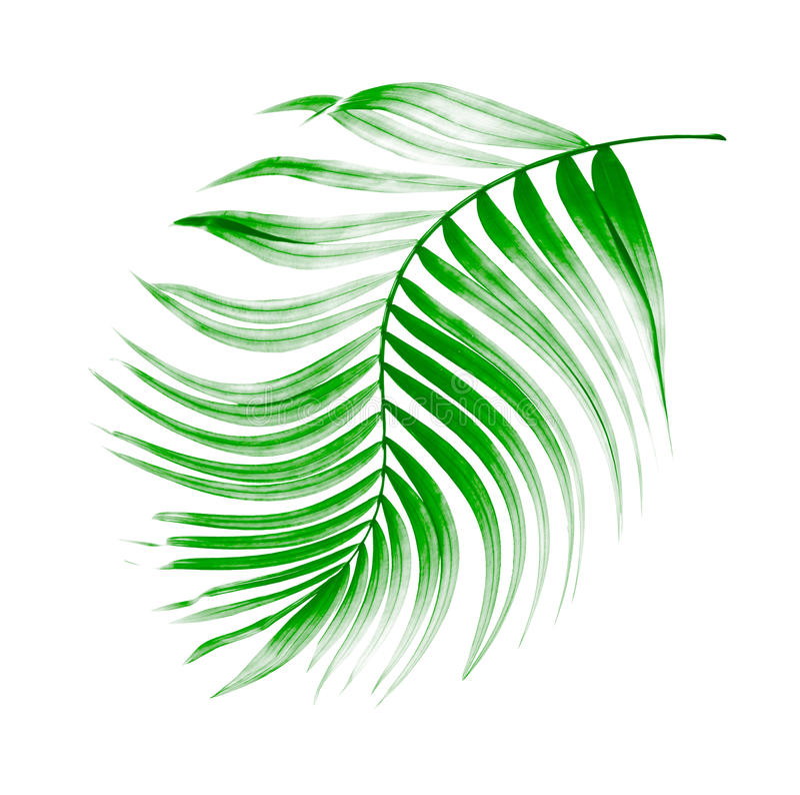 Πράσινο φύλλο του φοίνικα απεικόνιση αποθεμάτων