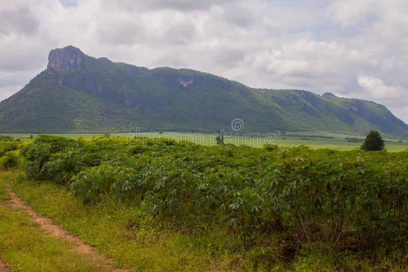 Πράσινο χρώμα του αγροκτήματος μανιόκων μπροστά από το υπόβαθρο βουνών στοκ εικόνα