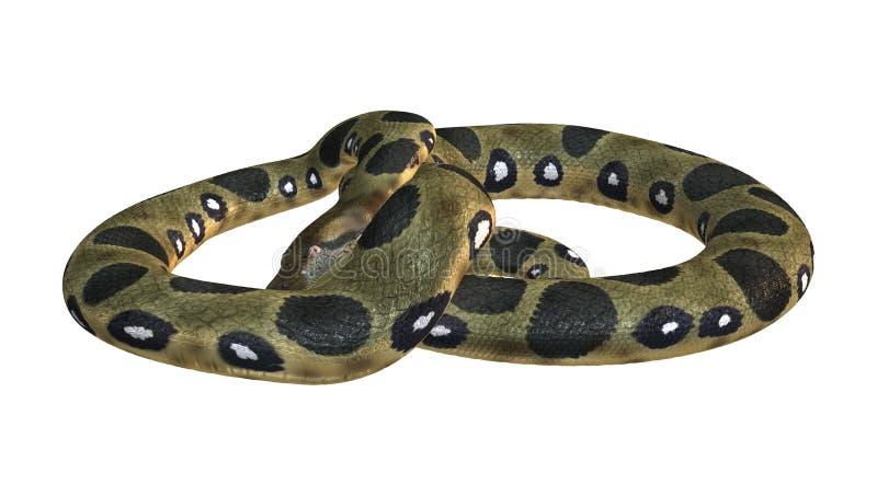 Πράσινο Anaconda στο λευκό στοκ φωτογραφίες με δικαίωμα ελεύθερης χρήσης