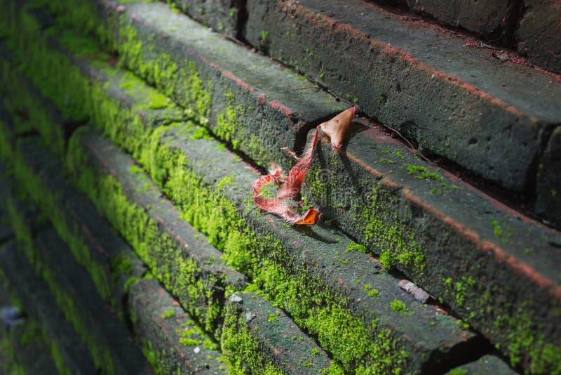 Πράσινο MOS στον τοίχο στοκ φωτογραφία με δικαίωμα ελεύθερης χρήσης