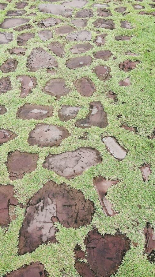 Πράσινο nicefloor πατωμάτων στο phimai στοκ φωτογραφία με δικαίωμα ελεύθερης χρήσης