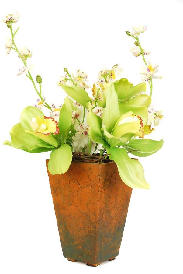 πράσινο orchid ανθών στοκ φωτογραφία με δικαίωμα ελεύθερης χρήσης