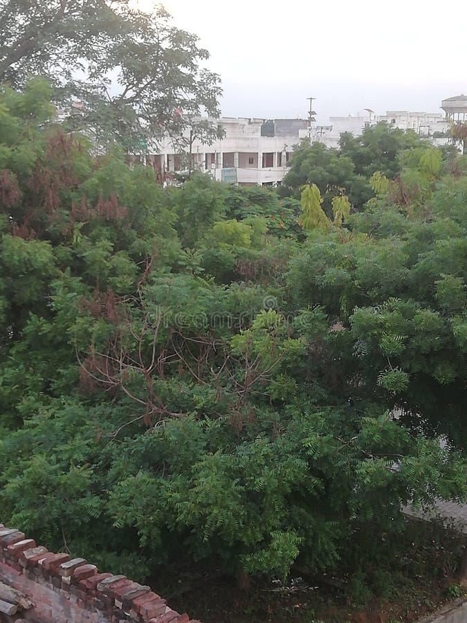 Πράσινο PIC δέντρων στο χρόνο βραδιού στοκ εικόνες