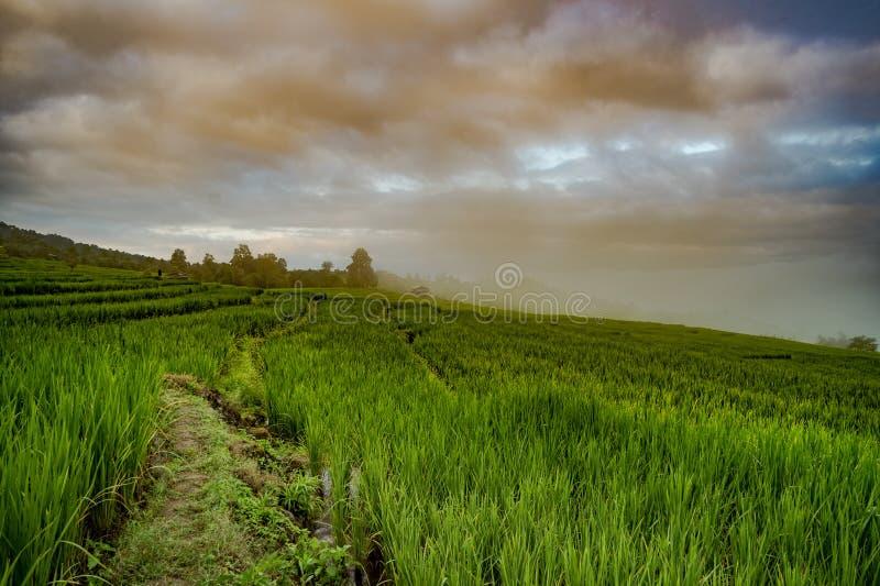 Πράσινο Terraced πεδίο ρυζιού σε Chiangmai, Ταϊλάνδη στοκ εικόνα με δικαίωμα ελεύθερης χρήσης