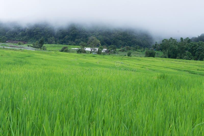 Πράσινο Terraced πεδίο ρυζιού Chiang mai, Ταϊλάνδη στοκ φωτογραφία