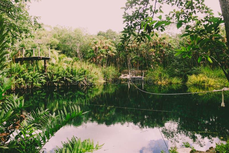 Πράσινο tulum ζουγκλών ειρήνης φύσης στοκ φωτογραφία με δικαίωμα ελεύθερης χρήσης