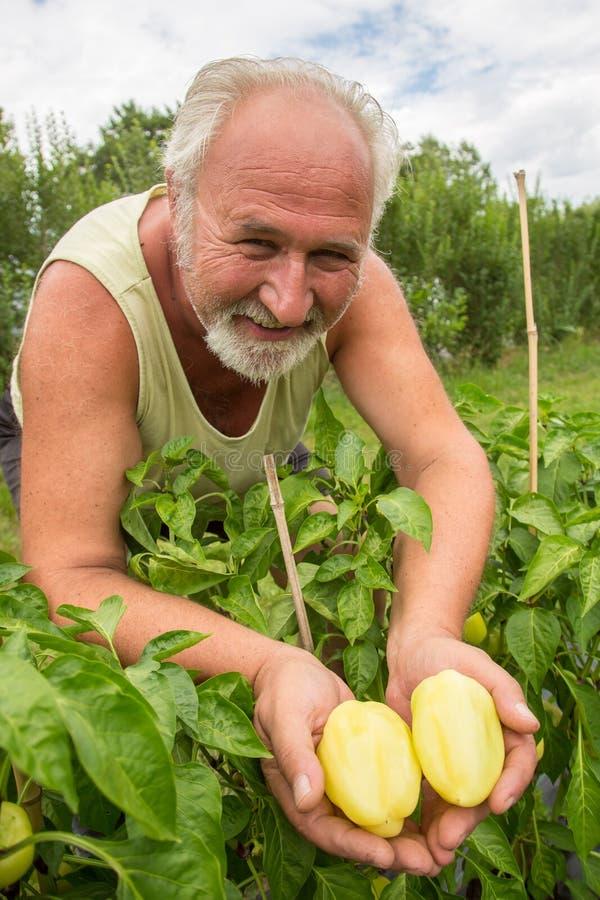 Πραγματικός αγρότης στον εγχώριο κήπο του στοκ φωτογραφίες με δικαίωμα ελεύθερης χρήσης