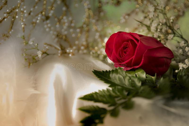 Πραγματικός φρέσκος κόκκινος αυξήθηκε στον άσπρο ρομαντικό γαμήλιο βαλεντίνο υφασμάτων μεταξιού στοκ φωτογραφία με δικαίωμα ελεύθερης χρήσης