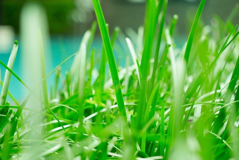 Πρασινάδα ζουγκλών και πολύβλαστη χλόη κοντά σε αυτήν την ειρηνική πισίνα Αυτό το γούστο της φύσης στην πίσω αυλή μου παρέχει το  στοκ εικόνες με δικαίωμα ελεύθερης χρήσης