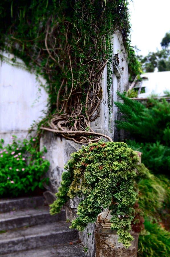 Πρασινάδα στη Γεωργία, βοτανικός κήπος Batumi στοκ εικόνες με δικαίωμα ελεύθερης χρήσης