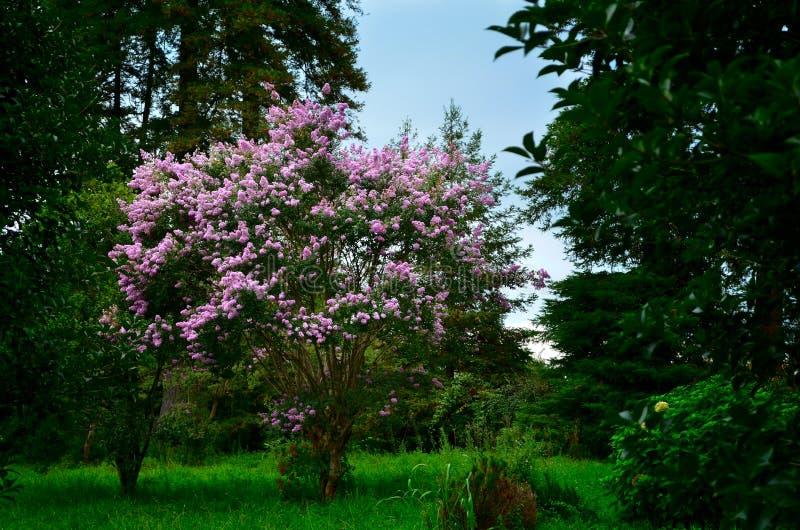 Πρασινάδα στη Γεωργία, βοτανικός κήπος Batumi στοκ φωτογραφίες