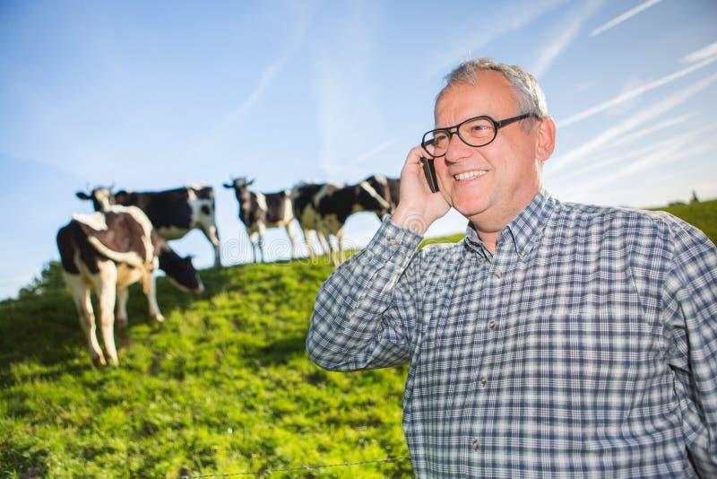 Πρεσβύτερος στην επαρχία δίπλα στις αγελάδες σε ένα λιβάδι στοκ φωτογραφίες
